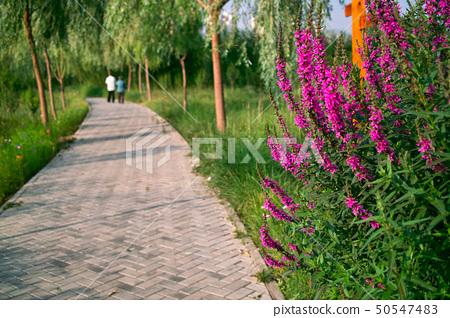 Beautiful park 50547483