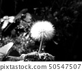 ธรรมชาติ 50547507