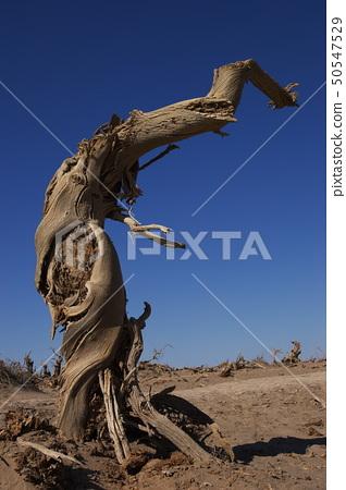 Dead tree 50547529