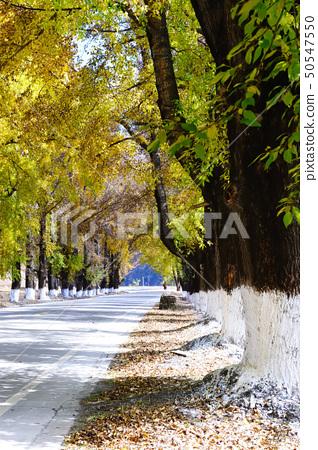 Autumn road 50547550