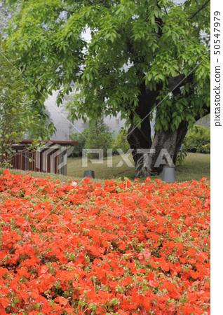 Flowers in garden 50547979