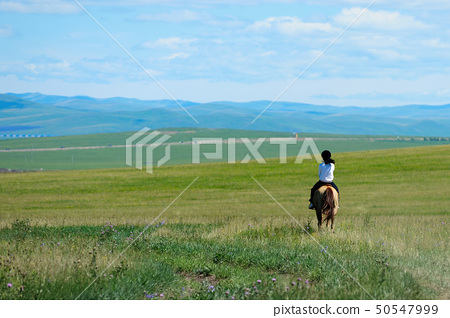Riding horse in grassland 50547999