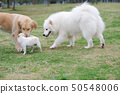 Three dogs playing 50548006