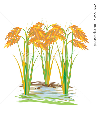 rice plant vector design stock illustration 50551332 pixta rice plant vector design stock