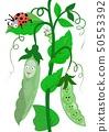Funny green peas and ladybug 50553392