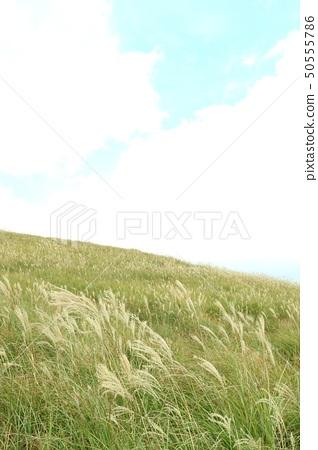 Susukihara landscape 50555786