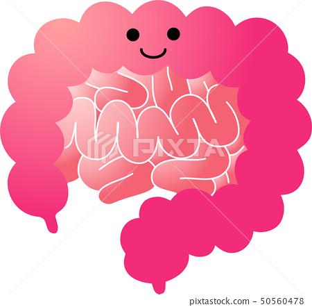 Organ large intestine small intestine human body illustration healthcare cute 50560478