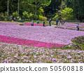 在三田市的Shiba-sakuraen花地毯 50560818