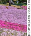 在三田市的Shiba-sakuraen花地毯 50560836