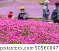 在三田市的Shiba-sakuraen花地毯 50560847