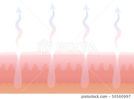 Human Cutaneous Respiration Skin Breathing 50560997