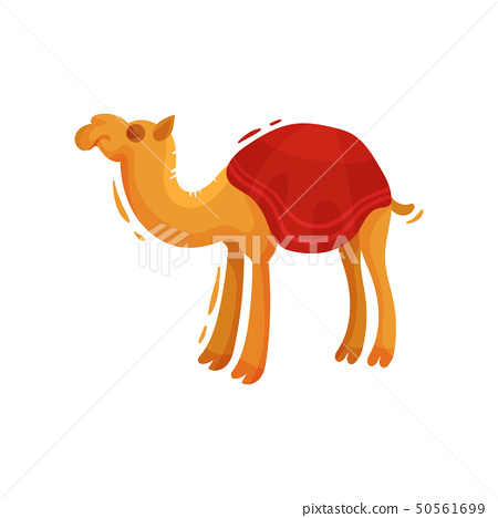 One-humped camel in a cape. Vector illustration on white background. 50561699