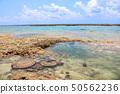 오키나와 바다 산호 50562236