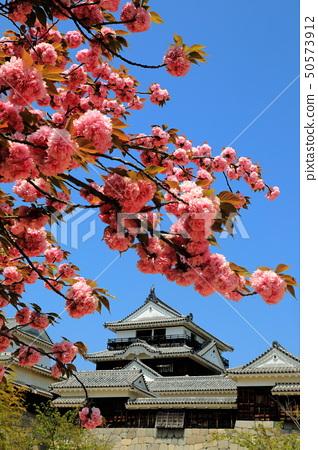 마쓰야마 성 에히메 현 마츠야마시 천수각 벚꽃 50573912