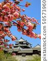 마쓰야마 성 에히메 현 마츠야마시 천수각 벚꽃 50573960