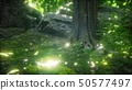 Scenic Forest of Fresh Green Deciduous Trees 50577497