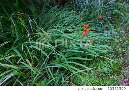 한라산,숲속,꽃, 50583599
