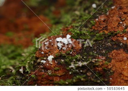 한라산,숲속 ,버섯 50583645