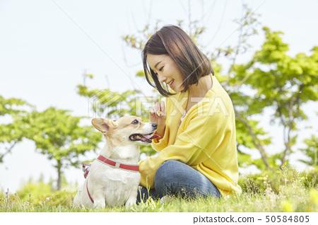 웰시코기,강아지,산책,젊은여자 50584805