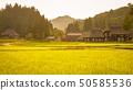 夏季鄉村景觀(在蘆之島環村的黃昏) 50585536