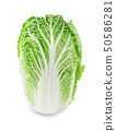 Fresh chinese cabbage on a white background. 50586281