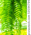 Tropical plant ivy green background. 50594794
