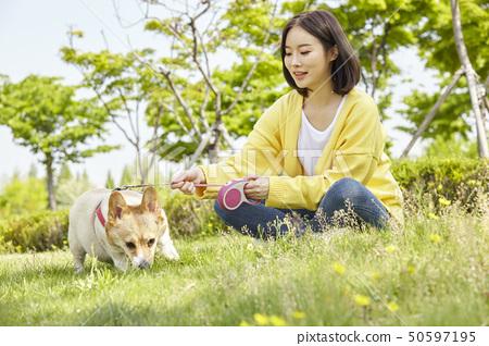 웰시코기,강아지,산책,젊은여자 50597195