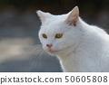 흰색 고양이 50605808
