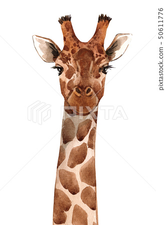 Watercolor giraffe portrait 50611776