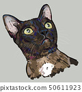 Drawing portrait of cat is staring up. 50611923