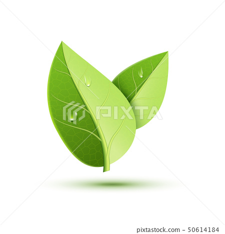Green leaf vector icon. Organic eco symbol nature plant isolate leaf icon design 50614184