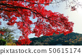 마루야마 댐의 단풍 50615174
