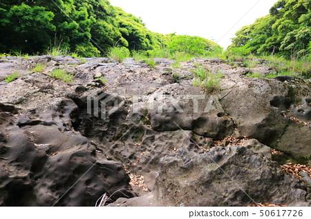 머체왓 숲길, 숲속, 산림,산책길, 50617726