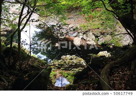 머체왓 숲길, 숲속, 산림,산책길, 50617749