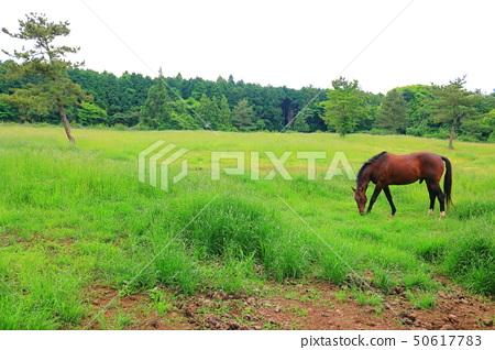 머체왓 숲길, 숲속, 산림,산책길, 50617783
