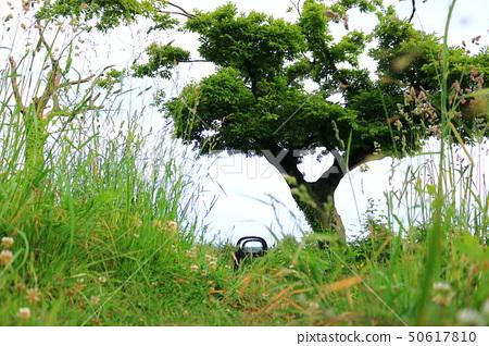 머체왓 숲길, 숲속, 산림,산책길, 50617810