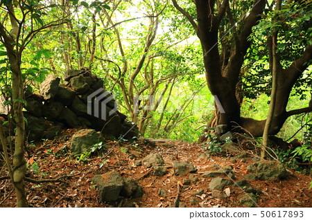 머체왓 숲길,숲속,산림,산책길, 50617893