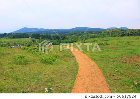 머체왓 숲길,숲속,산림,산책길, 50617924
