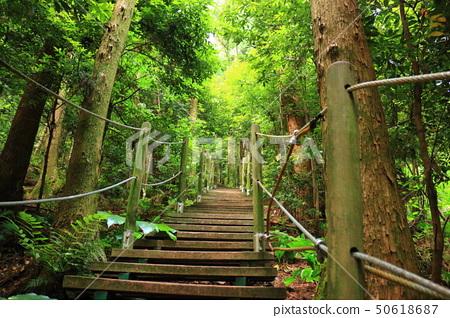 물영아리 오름,숲속,산책길, 50618687