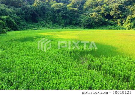 물영아리오름,숲속,산림,산책길, 50619123