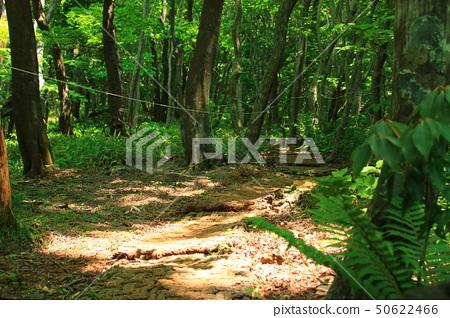 물찻오름,숲속,생태, 50622466