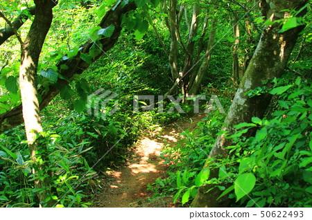 물찻오름,숲속,생태, 50622493