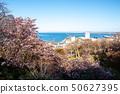 稚内公园的樱花 50627395