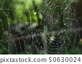 Cobwebs in the forest with dew drops. 50630024