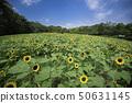在奈良縣北茨城郡和田町的Bami Hilly Park拍攝向日葵的照片 50631145