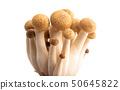 Shimeji mushrooms isolated 50645822