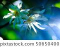 시키 미의 꽃 50650400