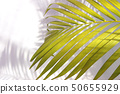 tropical palm leaf shadow on white wall background 50655929