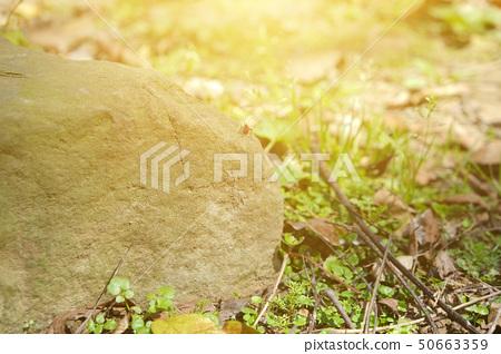 像公園的大石和早期的同伴陽光,以及作家的霍普。 50663359