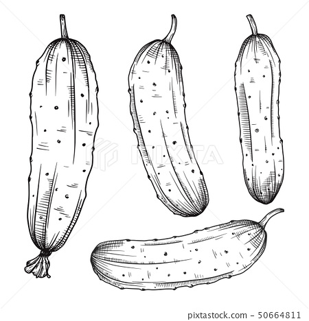 Set of different cucumbers 50664811